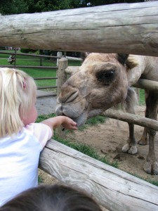 and watched Tia feed the camels. After she fed them 3-4 times without me giving her monye for food, I noticed that she was stanindg under the food bin, blinking up at people with her big blue eyes and they were giving her quarters! Little mooch.