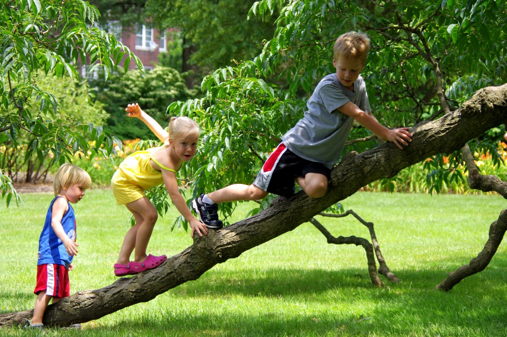 I'm not sure if this was allowed, but my kids can hardly resist climbing a tree.