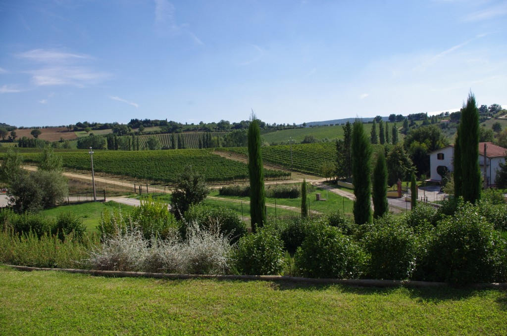 The Tuscan Hills.  So beautiful. This was at a winery where we did an impromptu wine tasting.  Now we have to figure out how to get the three bottles of wine we bought back home...