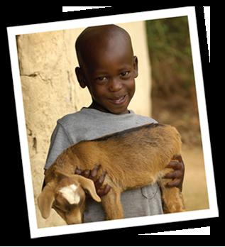 goat-large