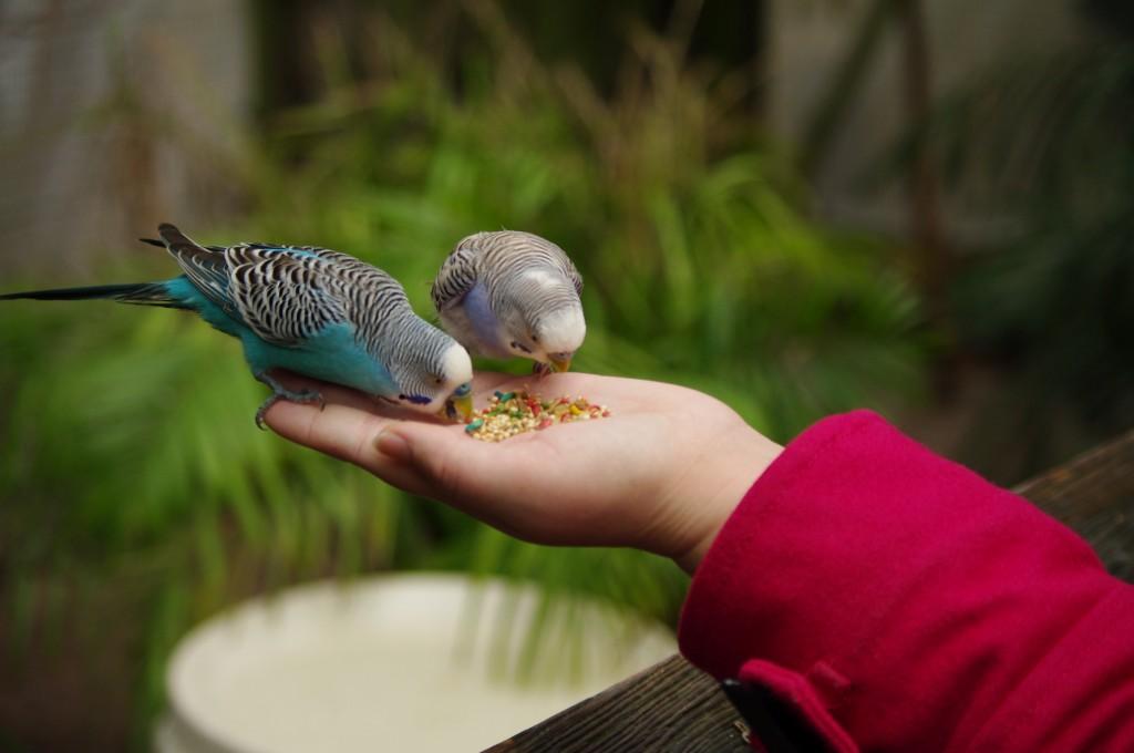 K feeding the birds.